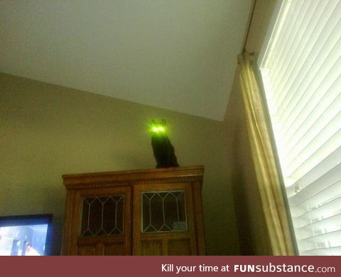 This cat with glowing eyes