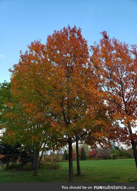 Peaceful multi tone tree