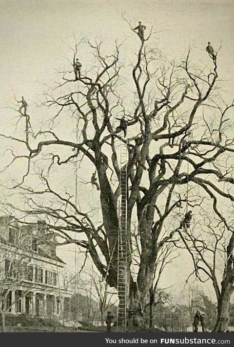 Men in Trees c. 1893