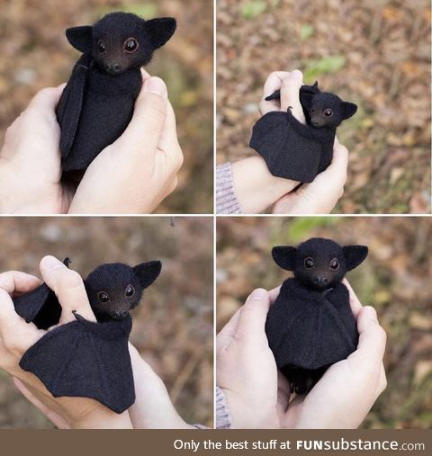 Blessed bat