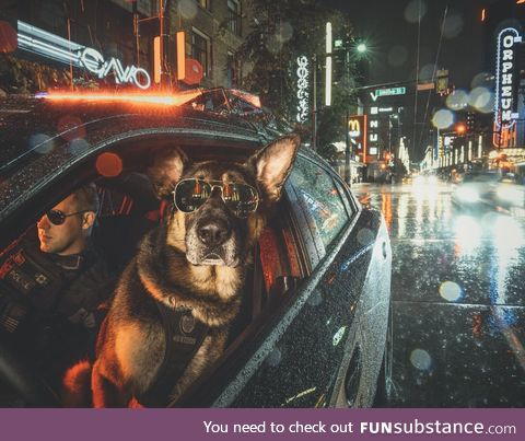 You will never look more badass than this K9 unit