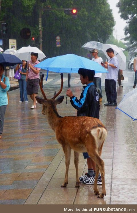 Share an umbrella with friends