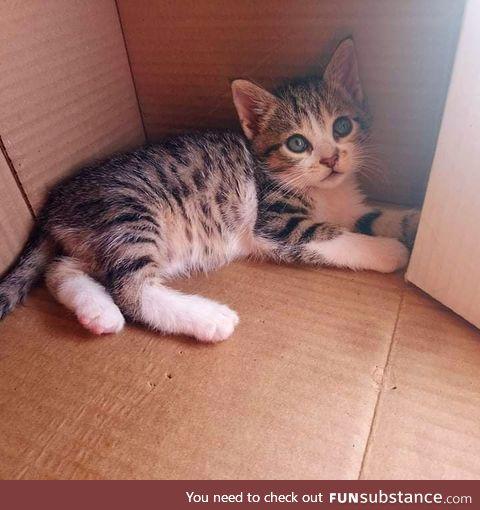 We got a 2nd kitten with @Releasethekraken. He's name is Salami :D