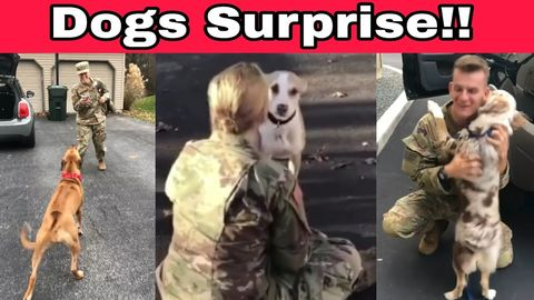 Dogs Welcoming Soldiers Home