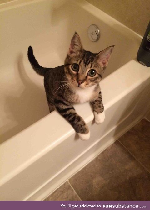 He always jumps into the tub after a shower. , meet Lou