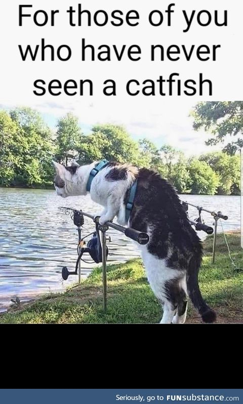 Have you ever seen a catfish?