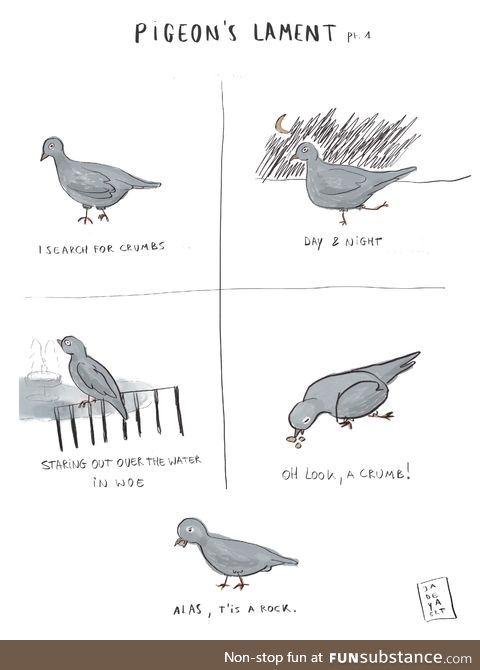 The pigeon's lament