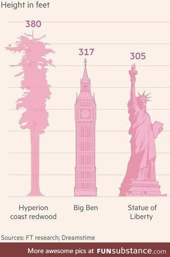 The Hyperion Coast Redwood seems pretty tall, relatively