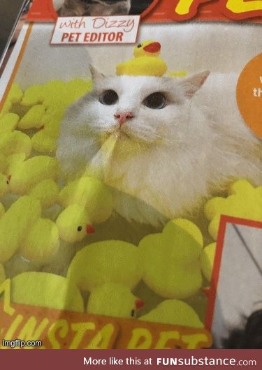 Cat with duckies