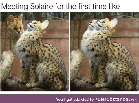 Periodic all-round quixotic Meerkat