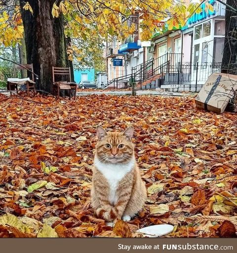 This kitter was built for Autumn