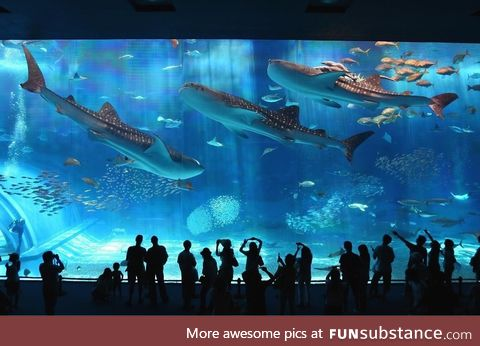 A great aquarium in Japan