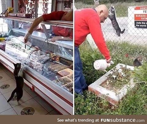 This Turkish butcher used to feed a stray cat. The cat has past away and he has gotten a