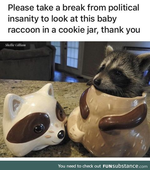 I need to lure a trash panda to my home one day.