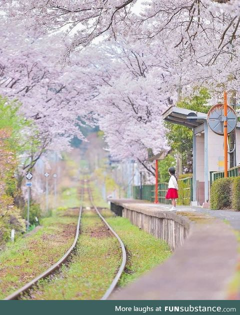 This photo of a girl waiting for a train is very Studio Ghibli-esque:D