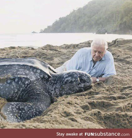 Sir David Attenborough with a giant leatherback sea turtle on the beach