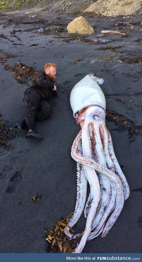 Giant squid washed up on New Zealand beach