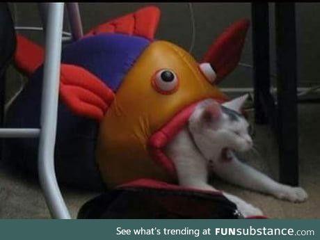 Nooo kitty!