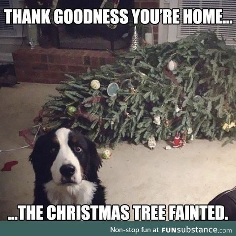 Uh oh, not the tree