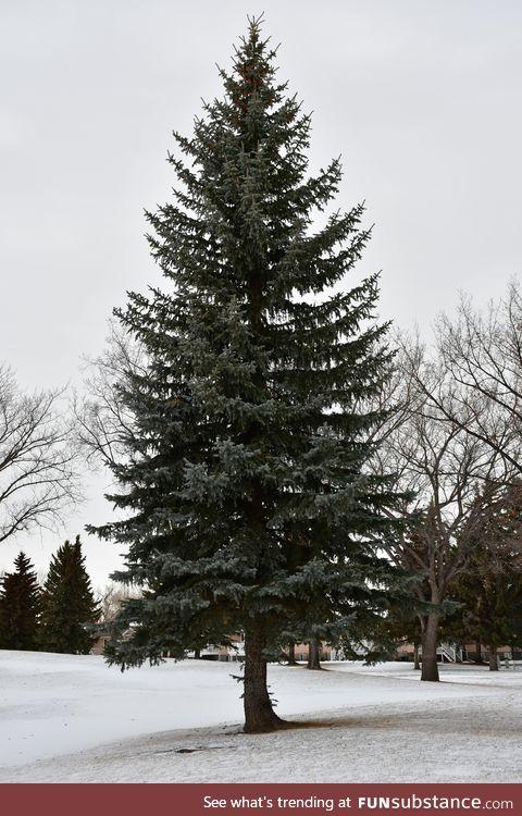 Treesubstance Pt: 1