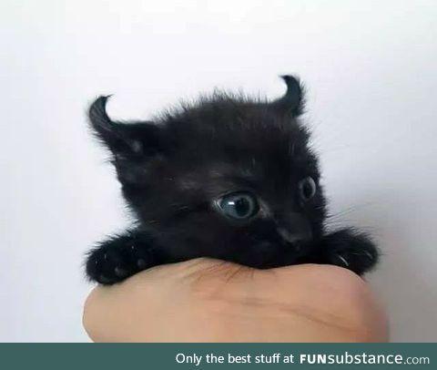 All hail Satan in his (small) feline form