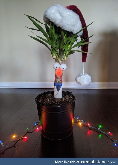 Holiday update: Gave our house plant a seasonally appropriate adjustment