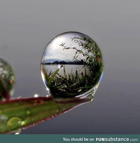 Macro shot of water on a leaf