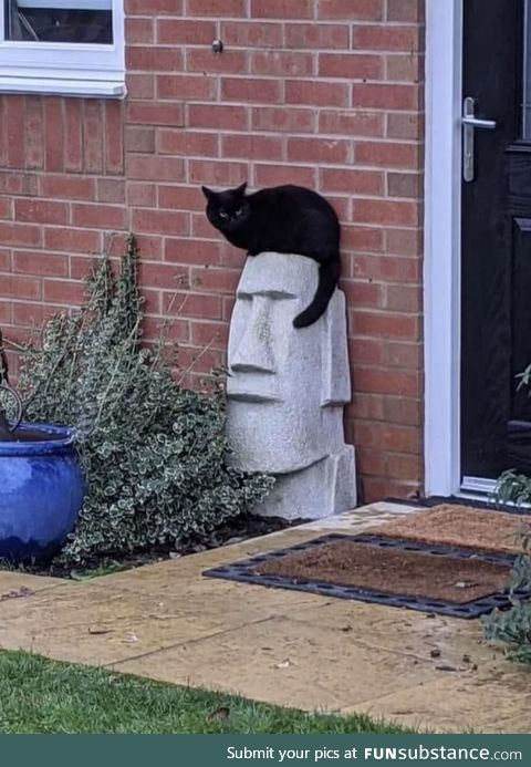 This cat makes this statue look like Elvis