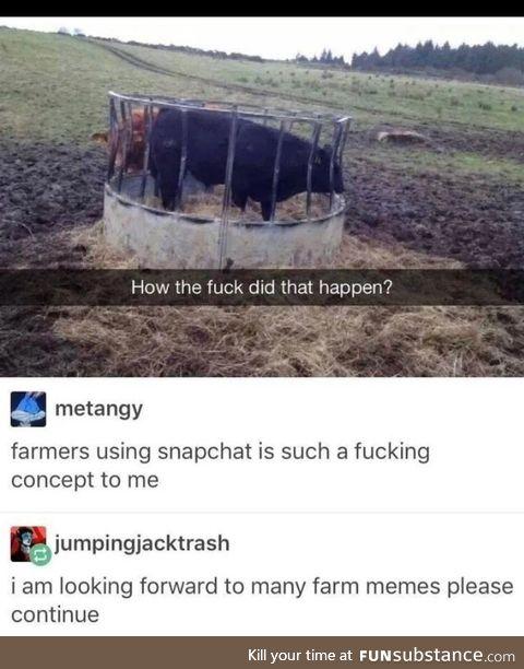 Farm boid