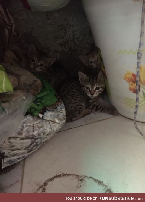 A cat gave birth to these cute little beautiful creatures in house storeroom