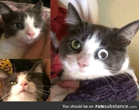 This cat lost vision in one eye, but thanks to modern technological advancements, his