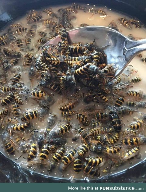 One spoon of wasps