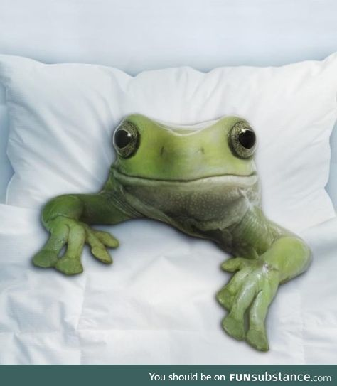 Froggo Fun #348 - 5 Days into Resolutions and Chill and He Gives You This Look
