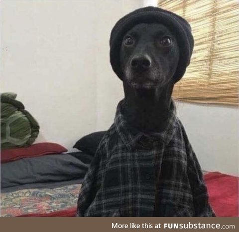 Snoop doggo