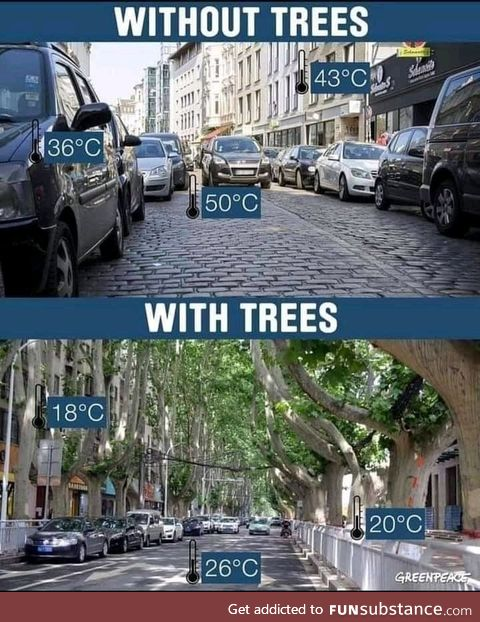 Trees do good work!
