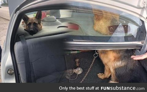 This dog got stuck in the car speakers. He's now a subWoofer