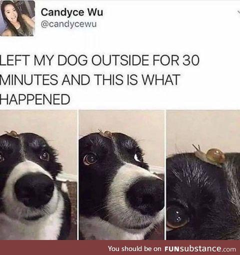 Doggo made a new buddo