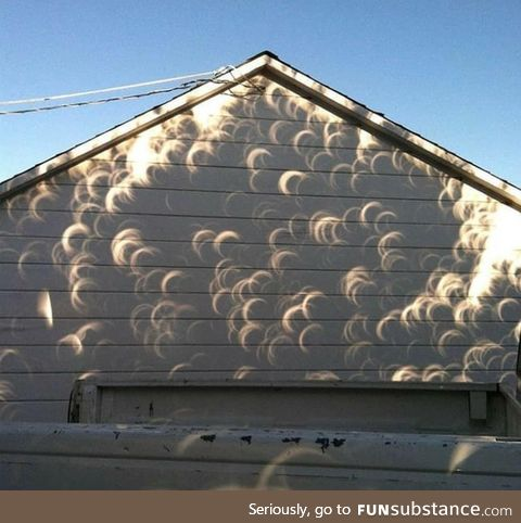 Shadow casted by a tree during an eclipse