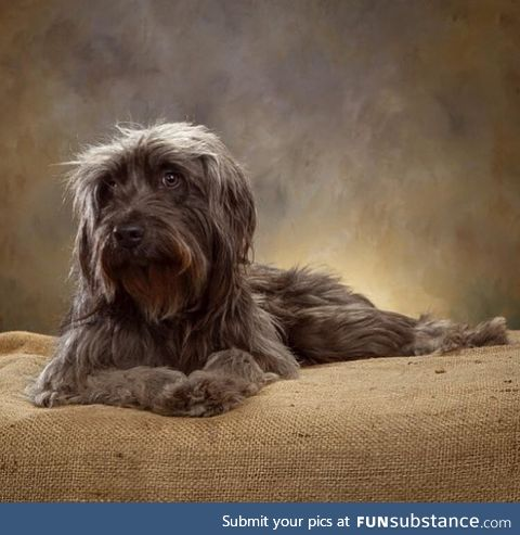 A local photographer was taking pet portraits for a donation to the local animal shelter