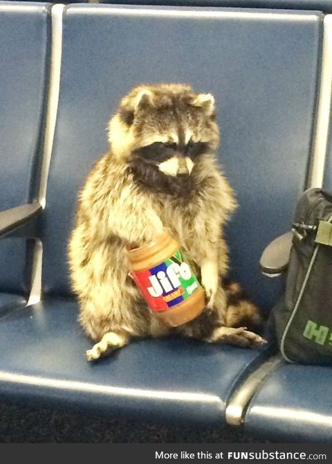 This raccoon just chillin'. Because of all the shit that has been happening, this might