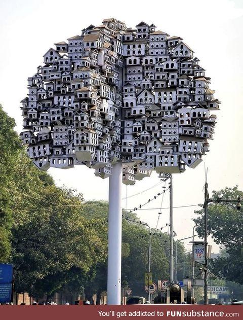 It's for the birds, Lahore, Pakistan