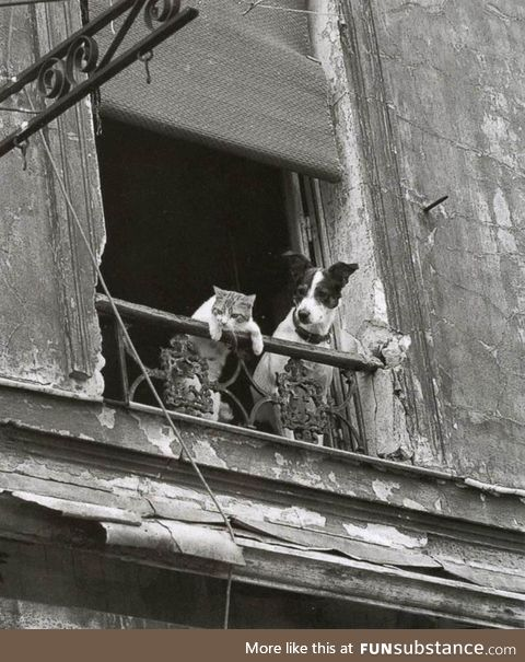 People watching, circa 1955