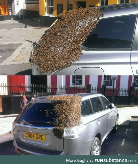 About 20,000 bees were following this car for 2 days because their queen was trapped