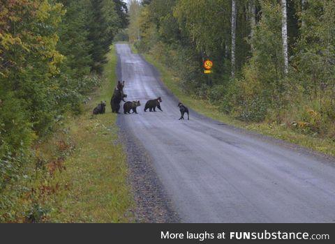 Dog meets a bear family