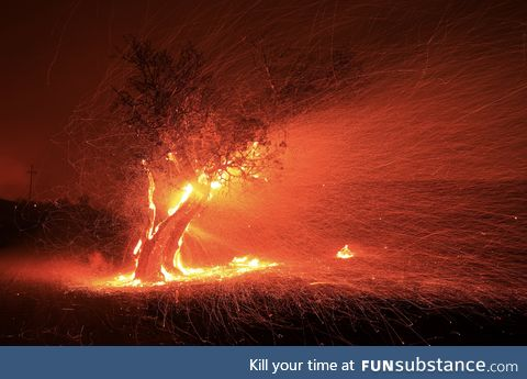 Embers being blown from a burning tree - kincade fire in California