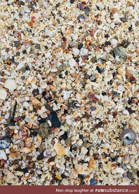 In Port Fairy, Australia, there is a beach almost exclusively made of tiny seashells