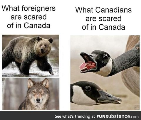 What foreigners are afraid of in Canada vs what Canadians are scared of