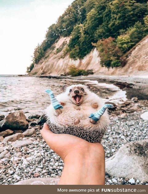 Heres a picture of a hedgehog in case you're having a bad day