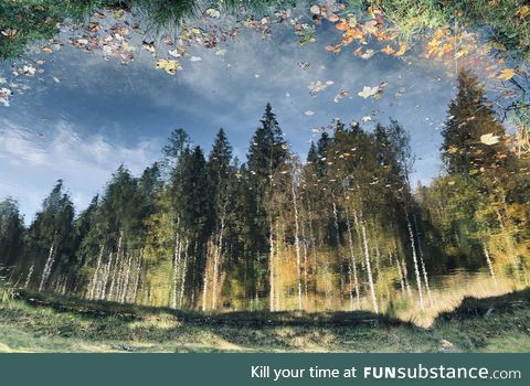 Autumn forest reflecting in a pond