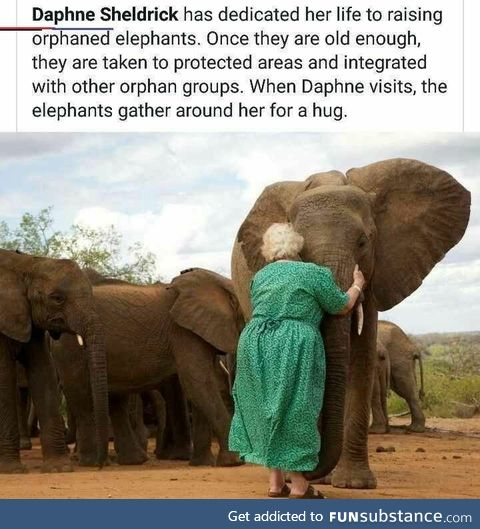 Hug the elephants